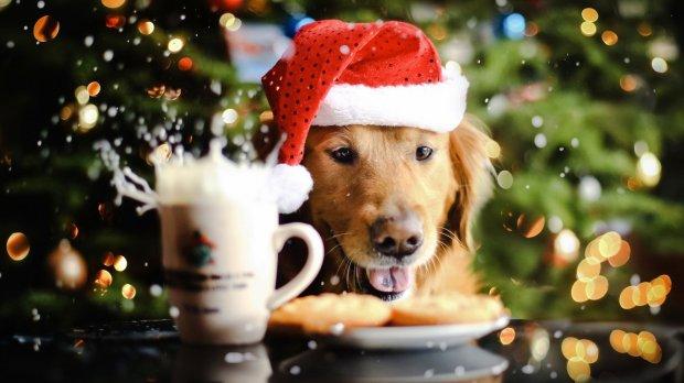 2018 – рік Жовтого Земляного Собаки