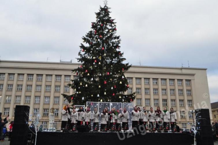 Ужгороду ялинку, як й у Львові, подарували безкоштовно