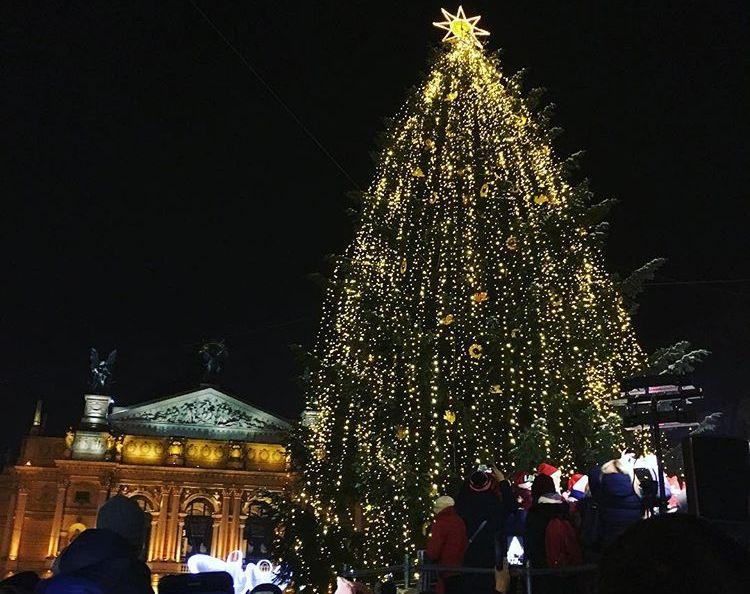 Новорічне дерево Львову подарувала галичанка з села Брюховичі. Фото photographer7054