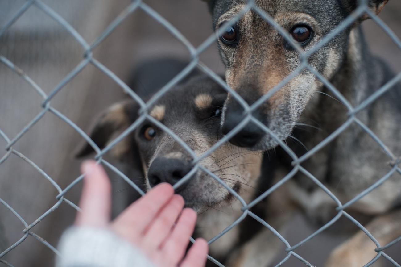 допомога тваринам у притулку