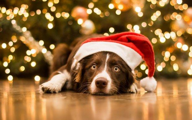 Новий Рік 2018 – рік Земляного Собаки