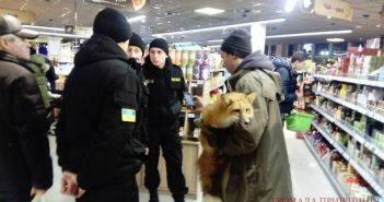Лисиця в магазині. Фото: kotsubynske.com.ua
