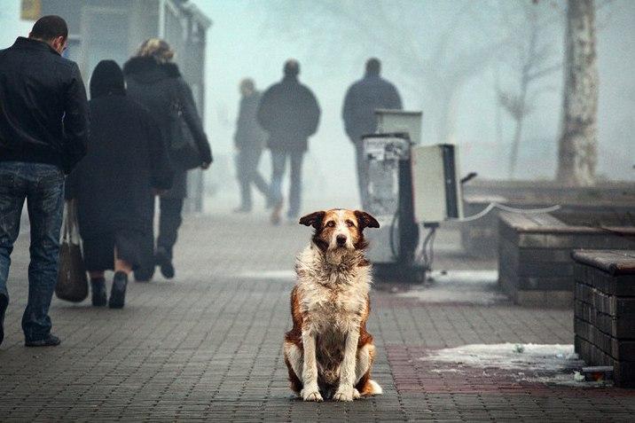 безпритульна собака