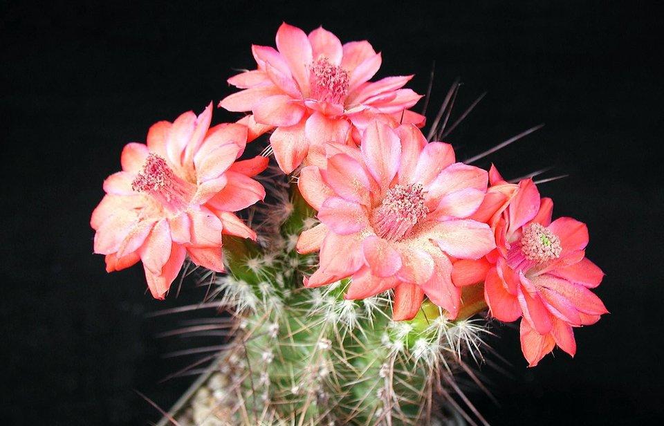 виставка кактуси цветут