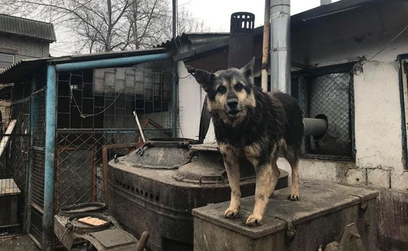 Киян просять допомогти притулку для тварин в Пирогово