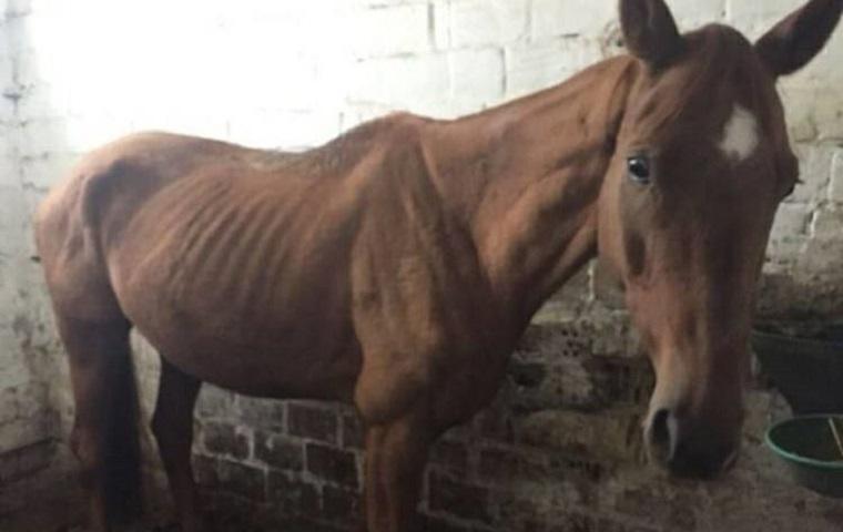 У Києві на території кінно-спортивного клубу виявили півтора десятки заморених голодом коней (фото, відео)