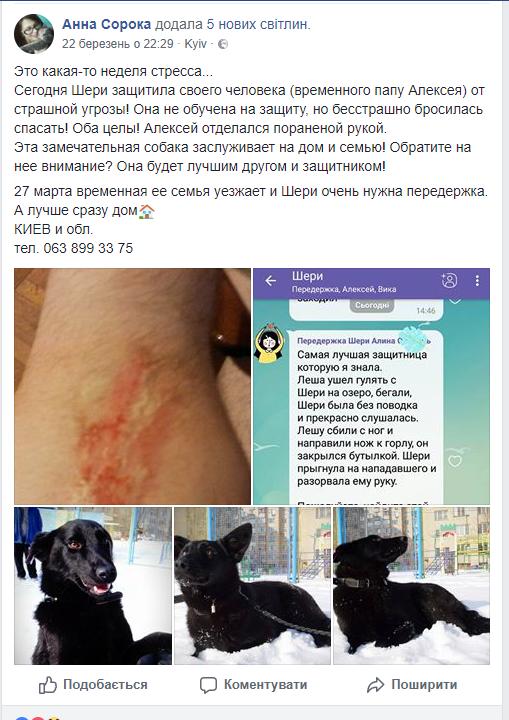 У Києві собака врятувала чоловіка від нападу бандитів (фото)
