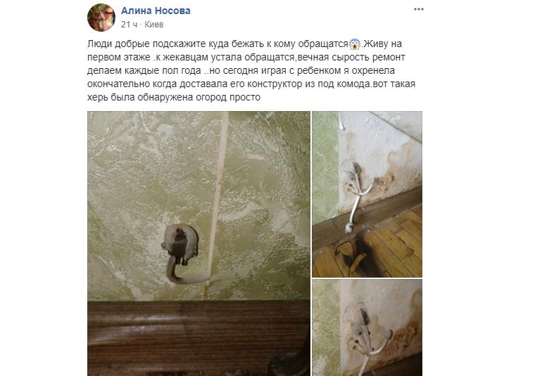 На стінах квартири в Солом'янському районі зросли гриби (фото)