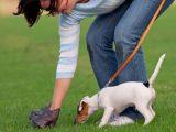 Депутати запропонували ввести великі штрафи для собачників, які не прибирають за своїми тваринами