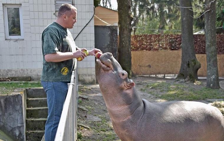 У Київському зоопарку показали юну бегемотиху Лілі (фото)