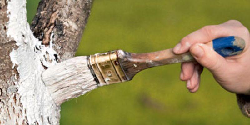 побілка дерев
