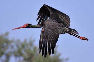 Київський зоопарк випустить на волю рідкісних птахів (відео)