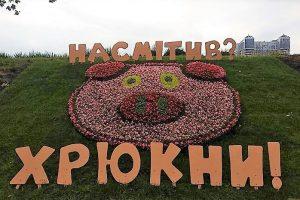 У Дніпровському районі з'явилося гігантське порося (фото)