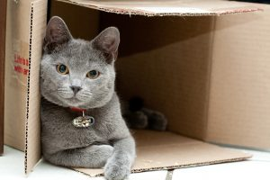 """10 шляхів, якими ваш кіт каже """"я тебе люблю"""""""