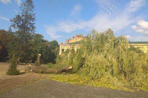 У парку КПІ вирубали більше десяти дерев. Серед них 100-річна ялина(фото)