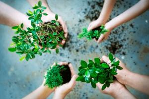 Жителі столиці обміняються рослинами