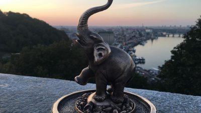 Під аркою Дружби народів з'явився мініатюрний слон (фото)