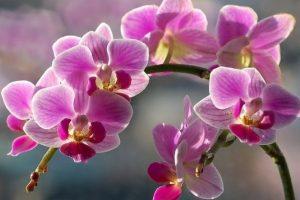 Не тримайте орхідею вдома! Виявляється, що квітка – дуже небезпечна
