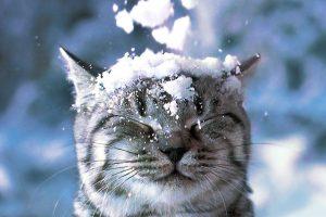 У Києві обіцяють перший сніг і мороз
