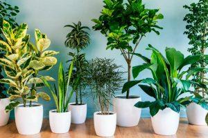 9 кімнатних рослин, які принесуть щастя в будинок