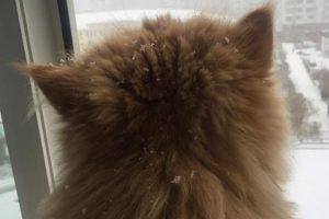 У Києві випав перший сніг (фото, відео)