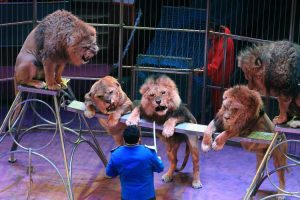 В Україні хочуть заборонити використання диких тварин у цирках