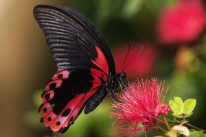 """Притча """"Урок Метелика"""". Головний закон успіху"""