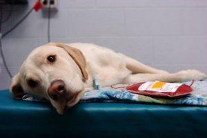 Мешканців столиці безкоштовно навчать надавати першу допомогу тваринам