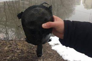 Через прорив труби в озері на Теремках зварилися живцем черепахи і риби (фото, відео)
