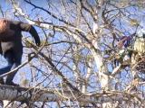 Бездомний чоловік оселився на дереві на Оболоні (відео)
