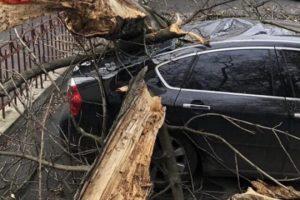 Ураганний вітер в Києві валив дерева на припарковані машини: з'явилися фото