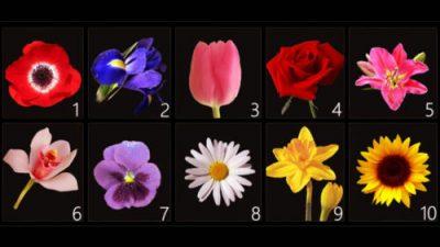 Виберіть квітку: тест, який розповість про вас найпотаємніше