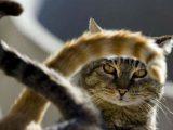 Притча, яка змінить ваше життя за хвилину: Кішка, її хвіст і щастя, за яким ми все життя бігаємо