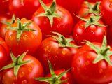 На Київщині в турецьких помідорах знайшли американську міль
