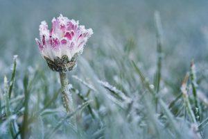 Мінус і навіть мокрий сніг. В Україну повертаються заморозки