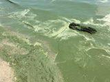В Одесі позеленіло море: купатися не рекомендують