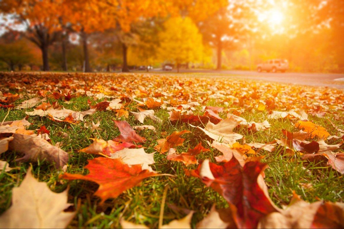 осінь вересень жовтень листопад листя жовте